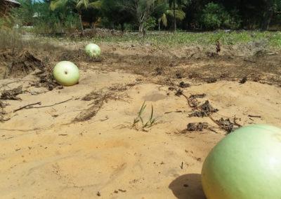 grow gourd 5